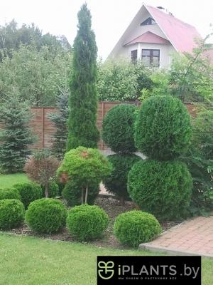 придание растениям шарообразной формы
