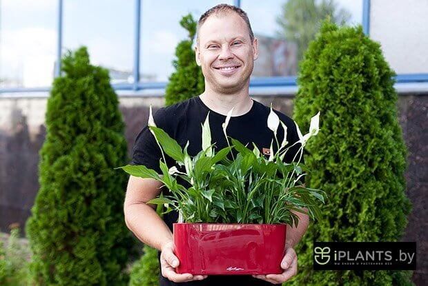 Озеленение интерьеров и уход за растениями в Минске