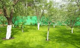 Уход за деревьями и лечение
