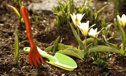 Скорая помощь садовым растениям