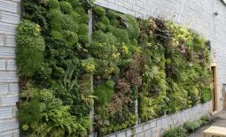 Вертикальное озеленение помещений