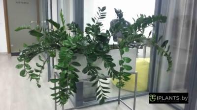 Восстановление внешнего вида растений пример 1