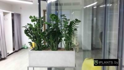 Восстановление внешнего вида растений пример 2