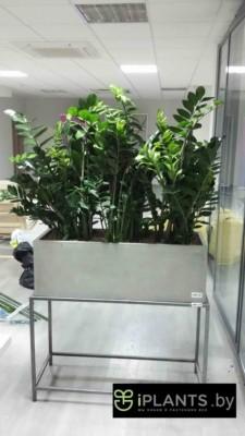 Восстановление внешнего вида растений пример 4