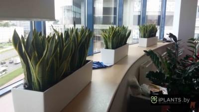уход и обслуживание растений в офисах от айплантс