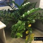 Восстановление внешнего вида растений пример 5