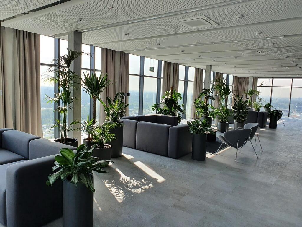 Озеленение бизнес-центров iplants.by
