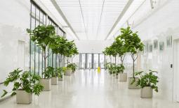 Озеленение бизнес-центров