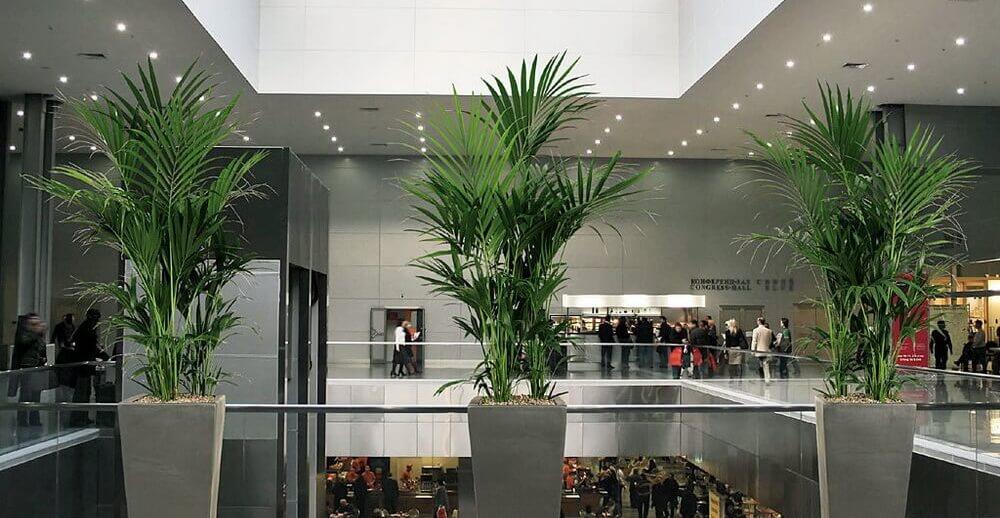 Озеленяем торговые центры