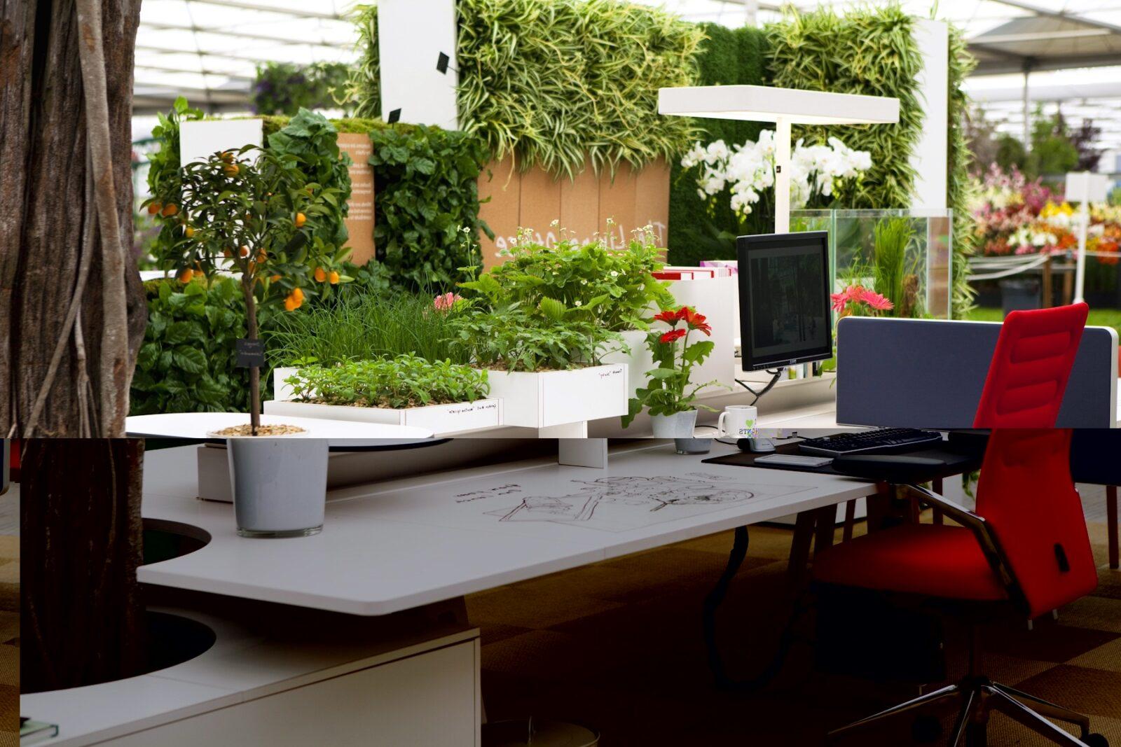 Пример озеленение офиса