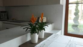 Скорая помощь комнатным растениям