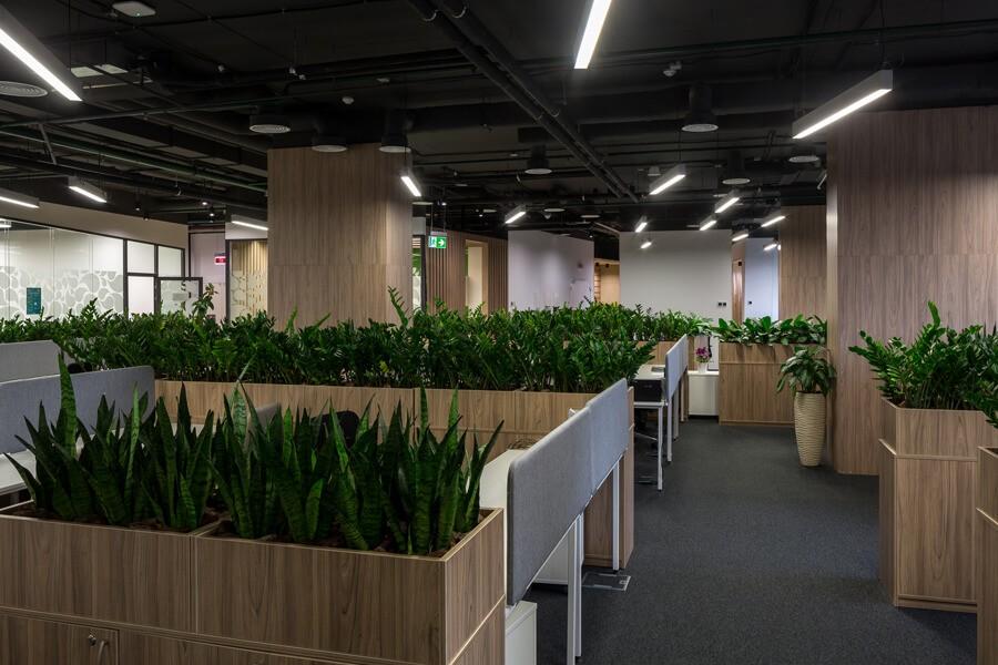 озеленение офисов от айплантс