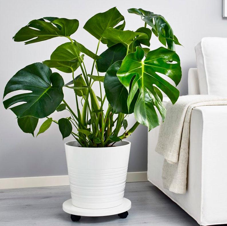 том, как большие офисные растения фото и названия только эстетическая проблема