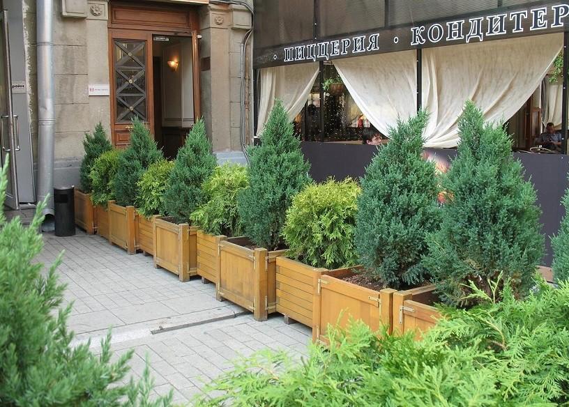 фитодизайн озеленение уличных кафе