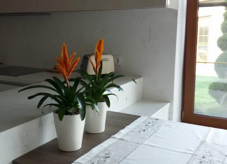 обслуживаем растения в офисах