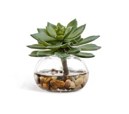 Композиция Эхеверия зеленая в стекле с галькой в воде фото