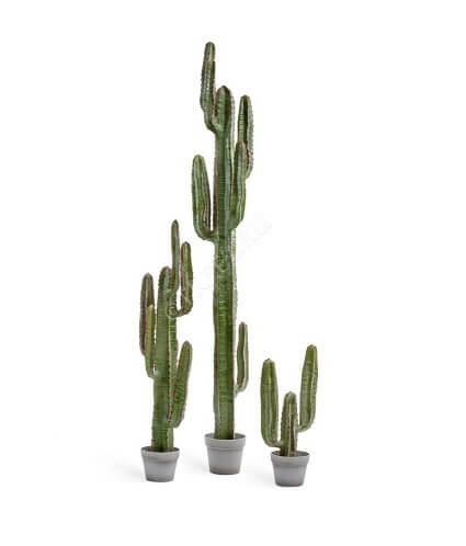 Кактус Цереус Мексиканский фото