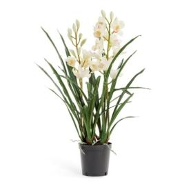 Орхидея Цимбидиум (белая) фото