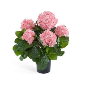 Гортензия куст (большой розовый) фото