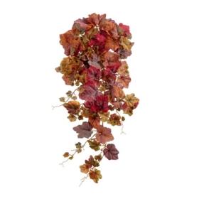 Виноградный куст Velvety фото