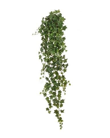 Английский плющ Биг Олд Тэмпл крупнолистный зеленый фото