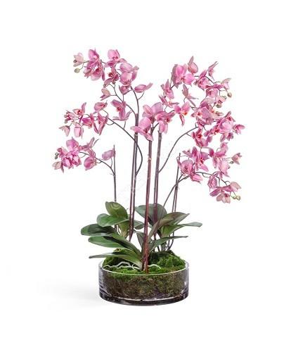 Орхидея Фаленопсис большая фото