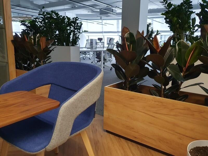 Озеленение офиса пример 2