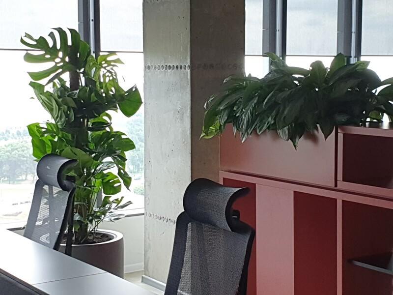 Озеленение офиса пример 4