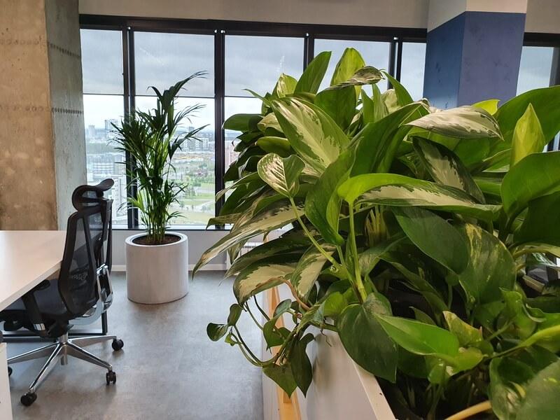 Озеленение офиса пример 8