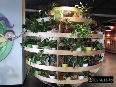 Хорошие недорогие кашпо с качественными и неприхотливыми растениями в минском офисе.