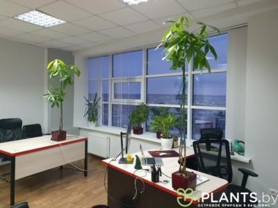 за 6 лет в офисе растения вытянулись
