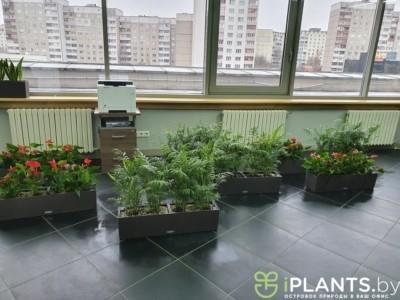 Обнаружили паутинный клещ на многих растениях нашего клиента