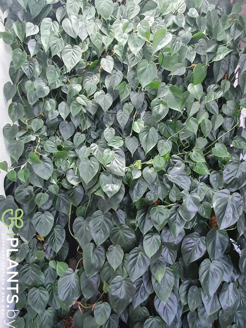 Альтернативное модульное вертикальное озеленение с филодендроном
