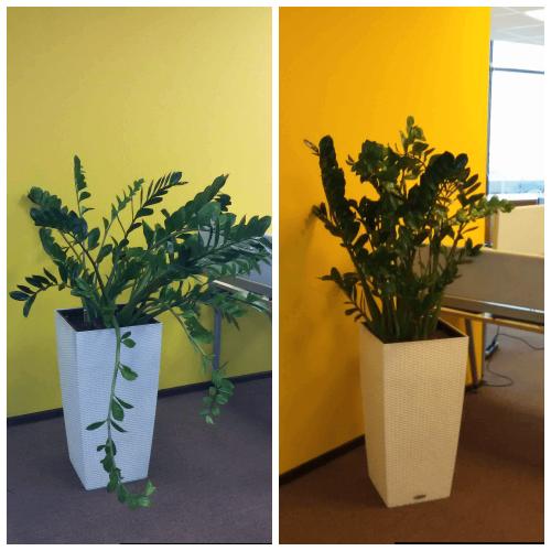 Помощь растениям