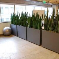 Зонирование-интерьера-растениями