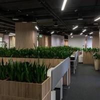 фитодизайн офисов